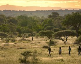 safari walk08