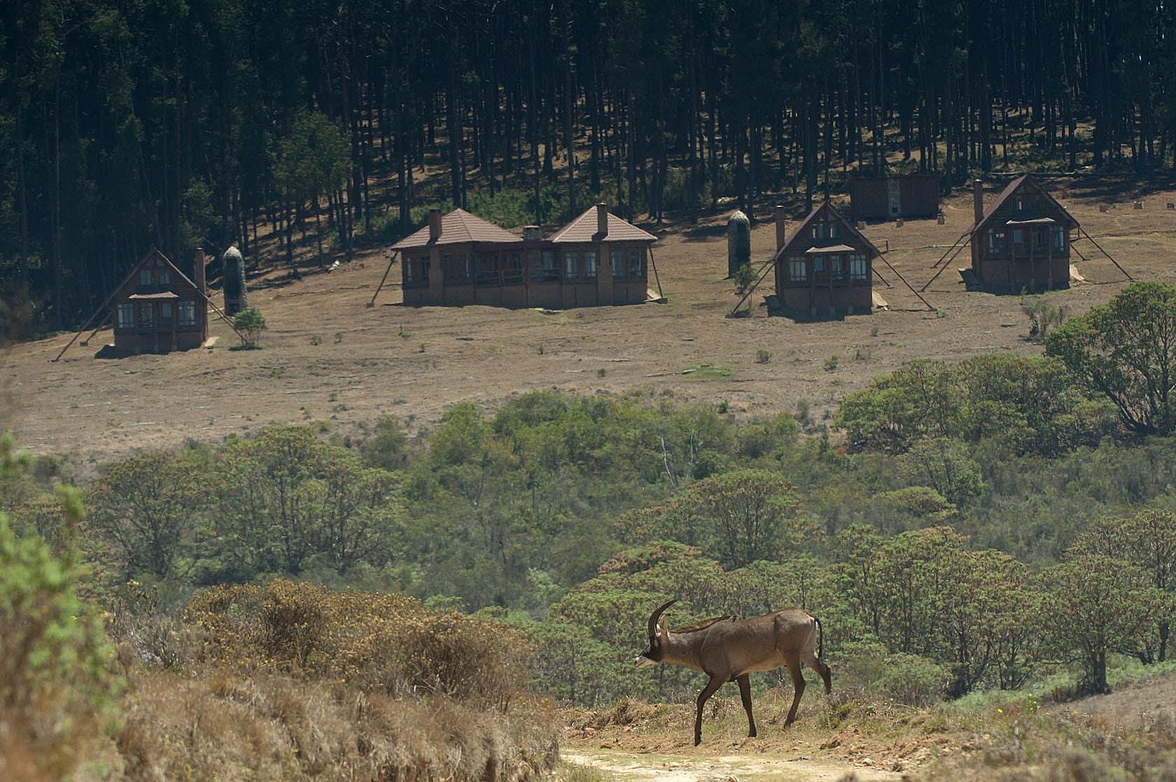 Chelinda Lodge