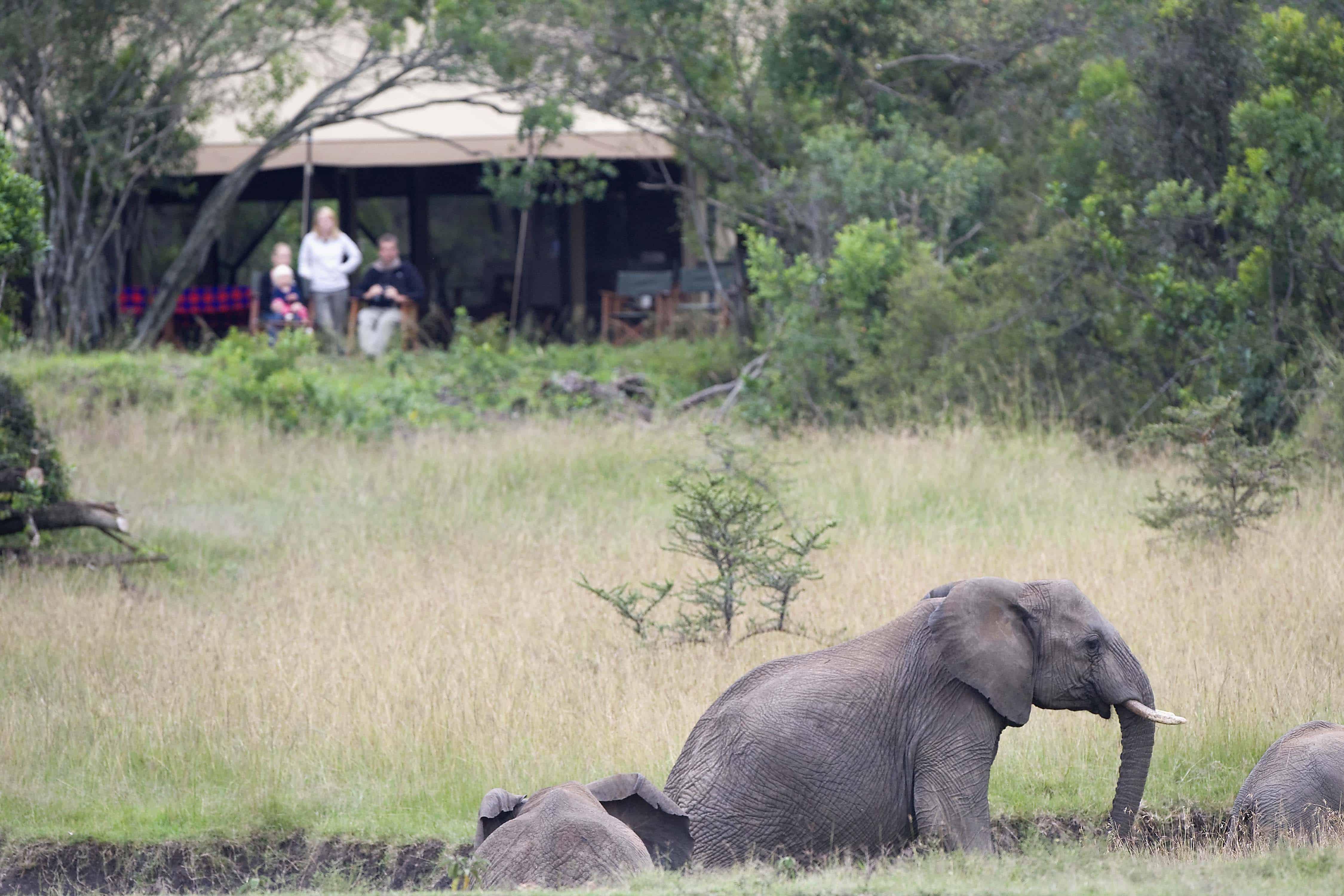 Encounter Mara Safari Camp