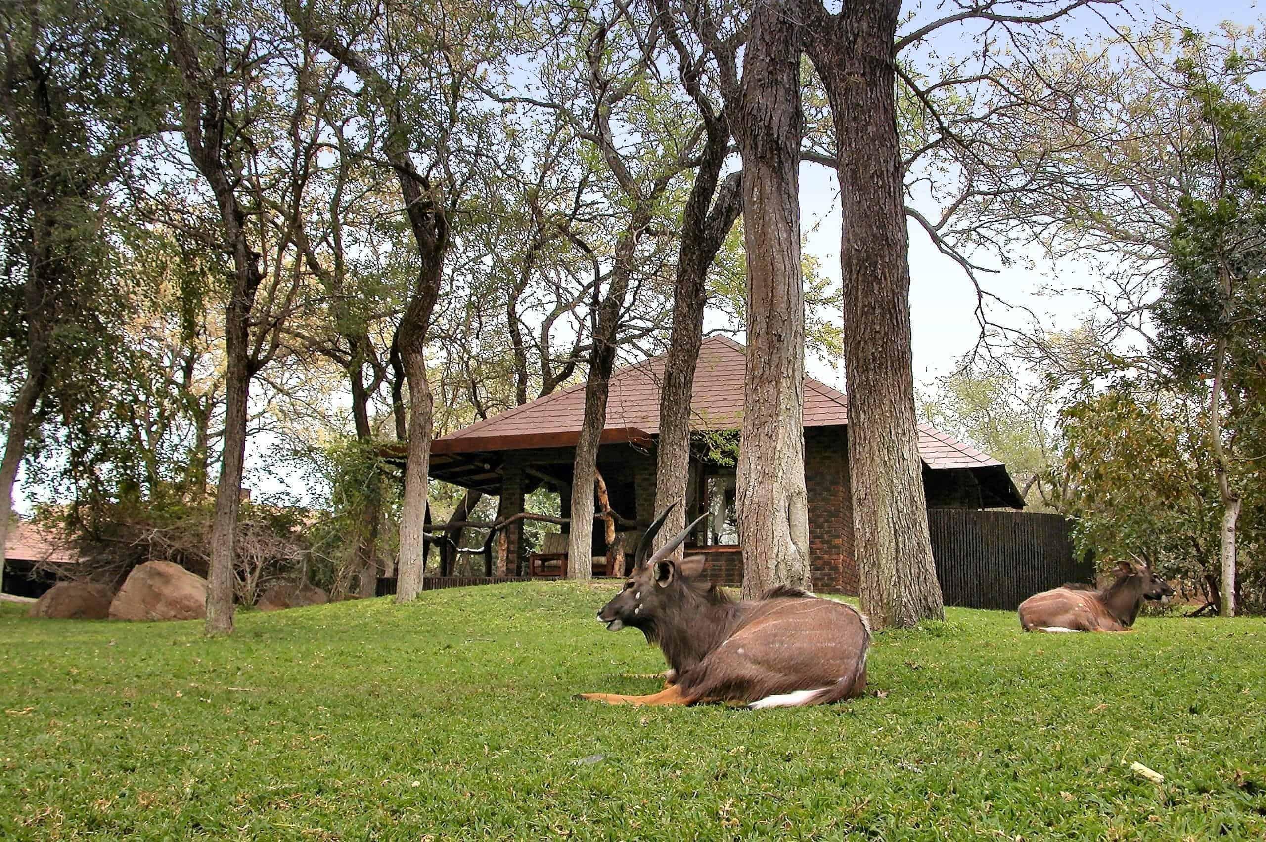 Idube Private Game Reserve