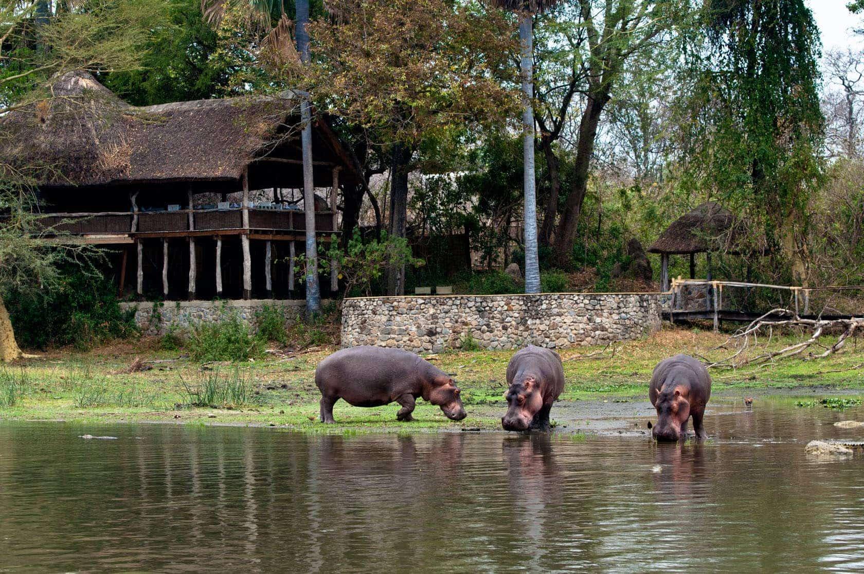 Mvuu Lodge Rates Amp Special Offers Malawi