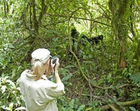 luxury-lodge-uganda-GorillaForestCamp-10 (1)