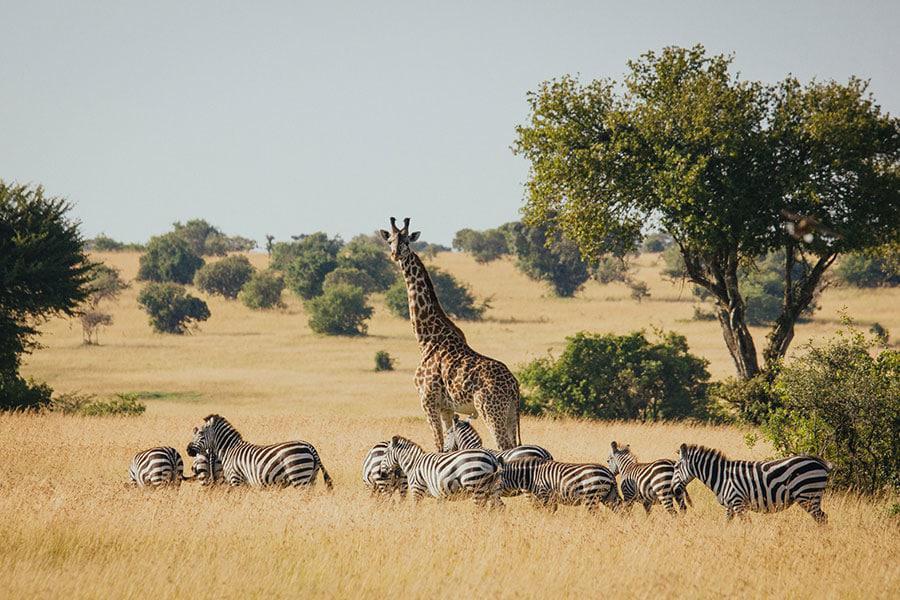 serengeti-gamedrives-8