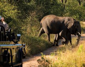 Kruger game drive tour