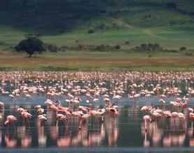 Ngorongoro Crater Lodge (1)RS_2