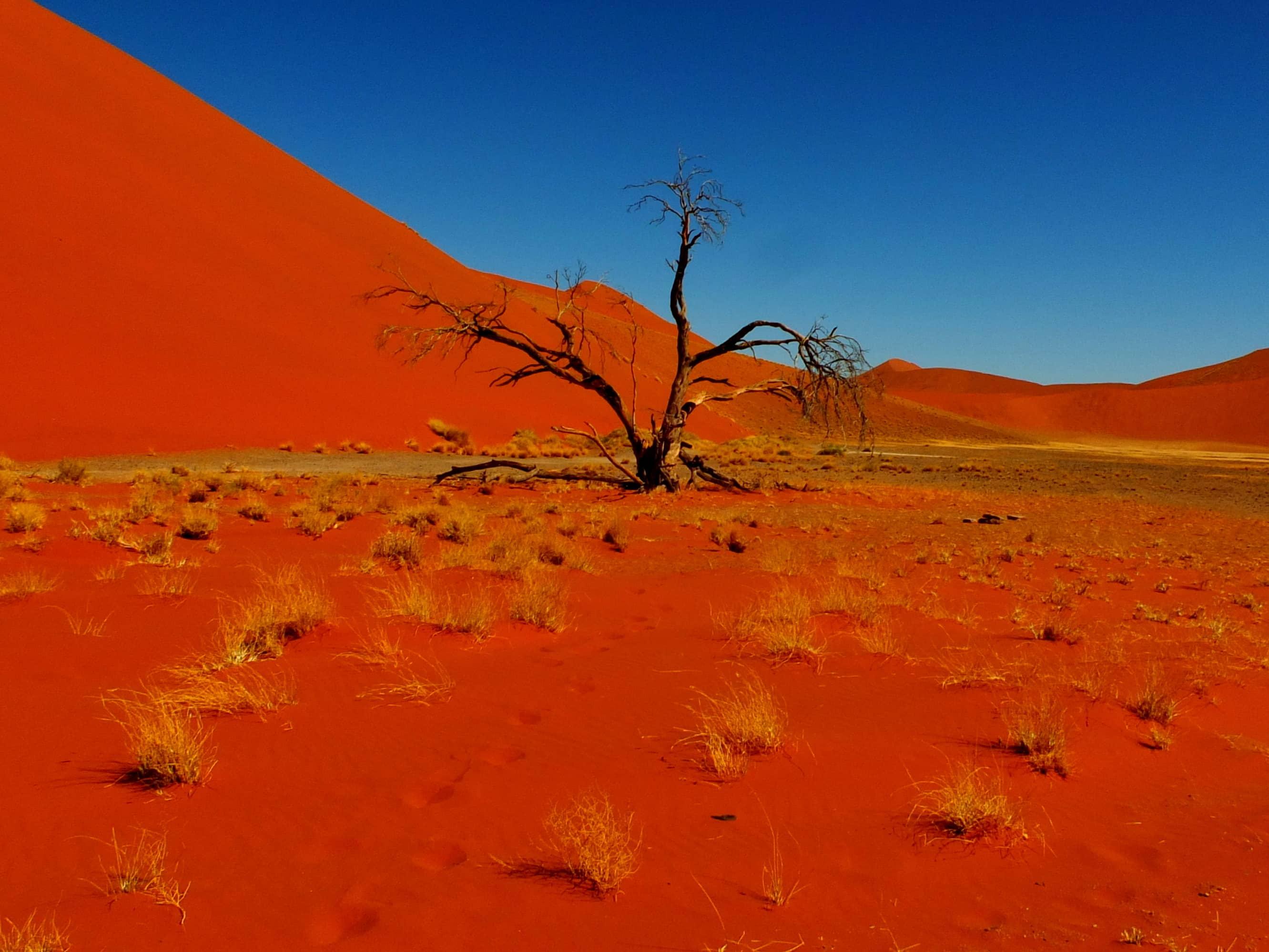 Serengeti National Park >> Luxury Namibia Safari (8 Days)