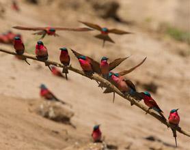 south Luangwa birds