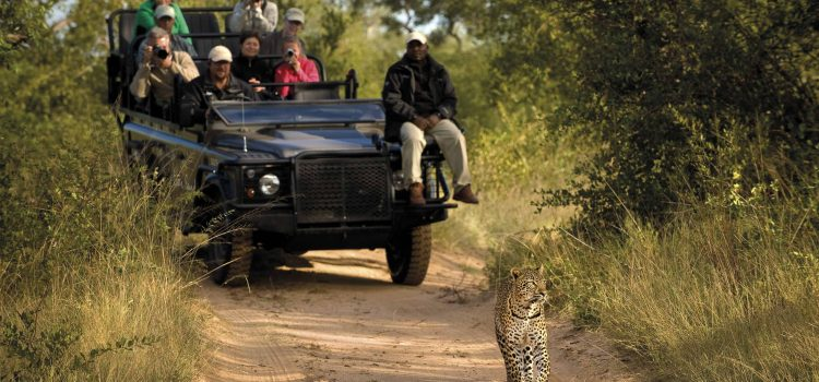 The Top 5 Sabi Sands Safari Lodges