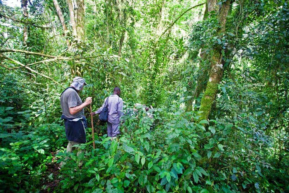 Gorilla trekking through Rwanda