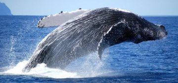 The Whale Migration: 5 Best Whale Watching Sites in Southern Africa
