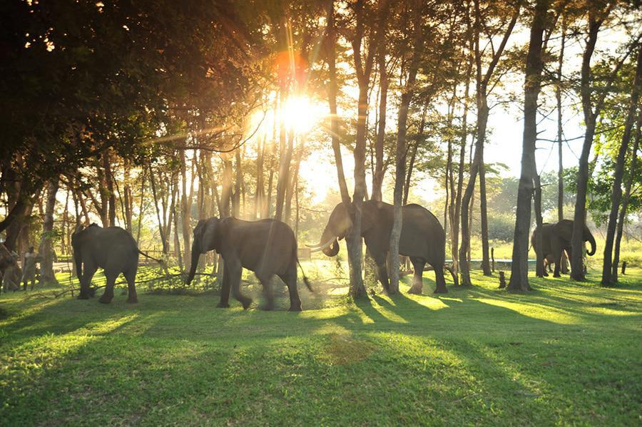 Elephants at Thorntree River Lodge