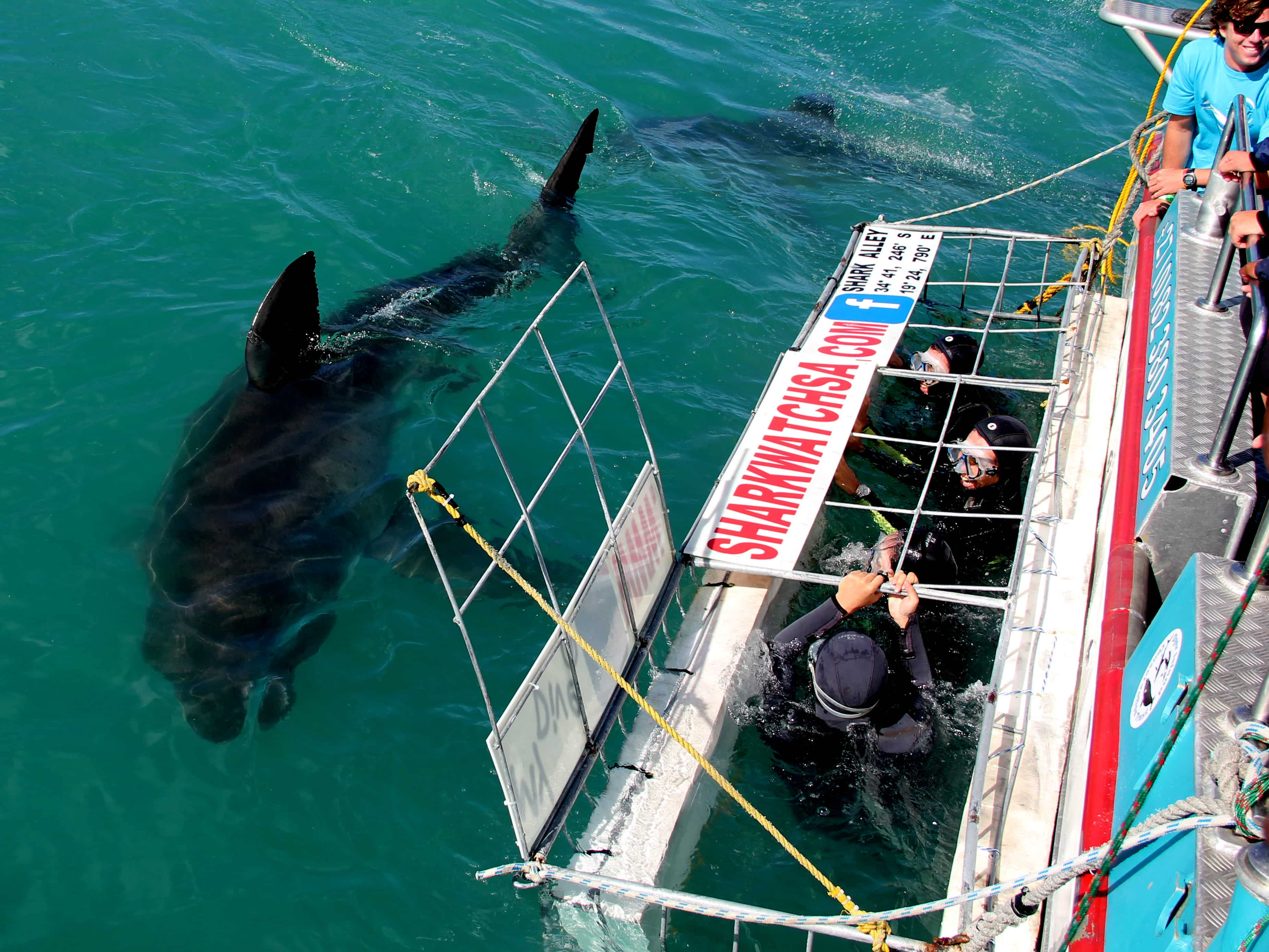 Shark Bay Boat Tours