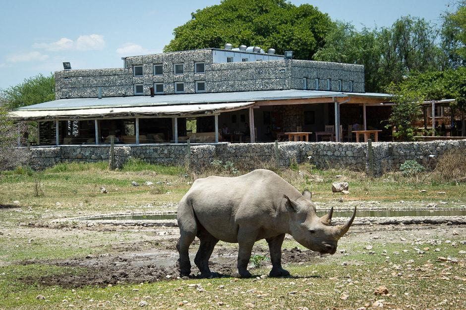 Rhino in front of Andersson's Camp