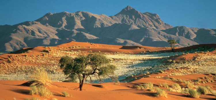 Wolwedans: Is This Namibia's Greenest Camp?