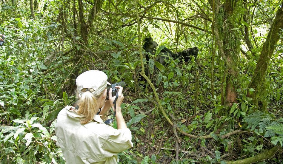 Woman taking picture of gorillas near Gorilla Forest Camp