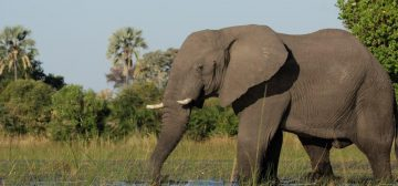 Candice's Botswana Trip