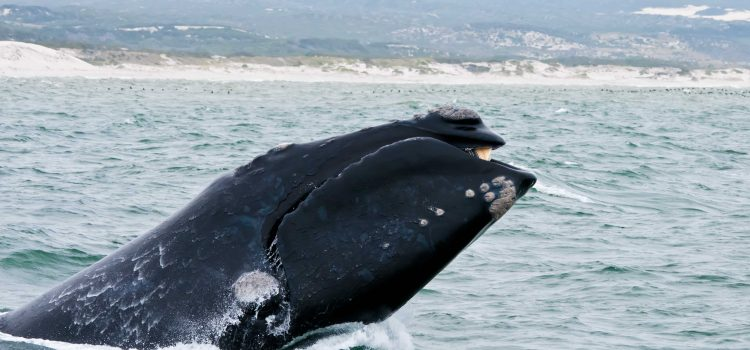 Our Top 5 Restaurants To Whale Watch From