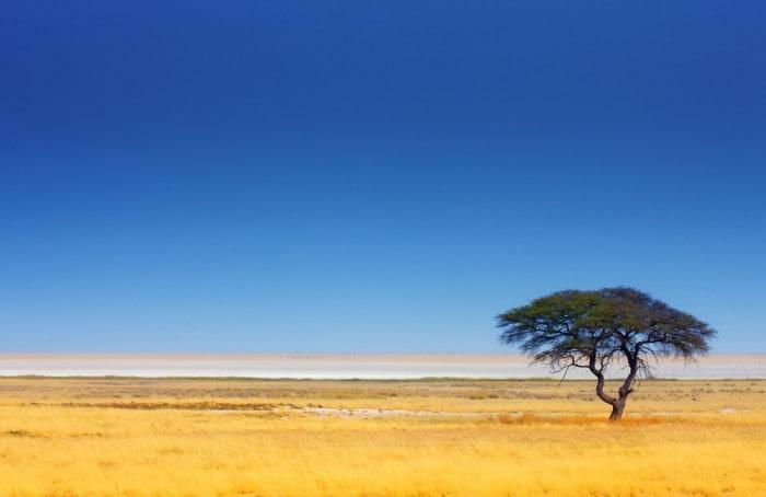 Lone Acacia Tree in the Serengeti