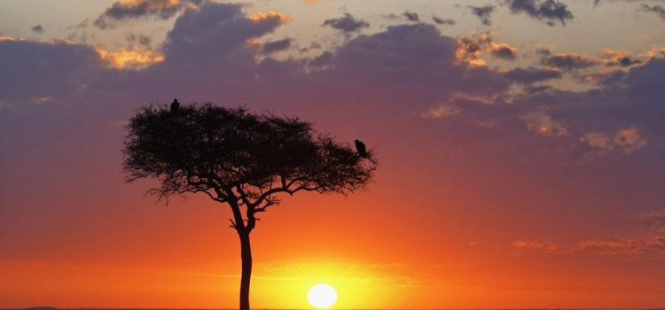 The Incredible Acacia Tree Phenomenon
