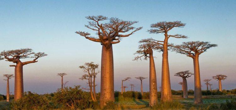 Racing The Planet Madagascar