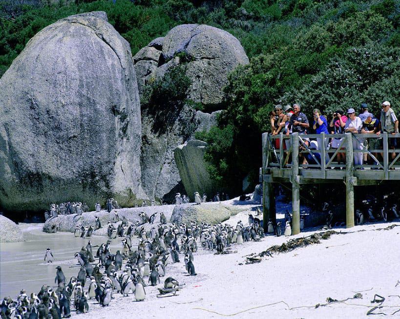Boulders beach entrance fee 2014