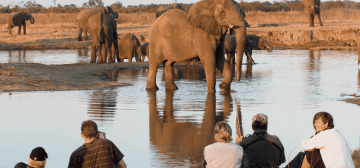 Our Top 10 Sofa Safaris