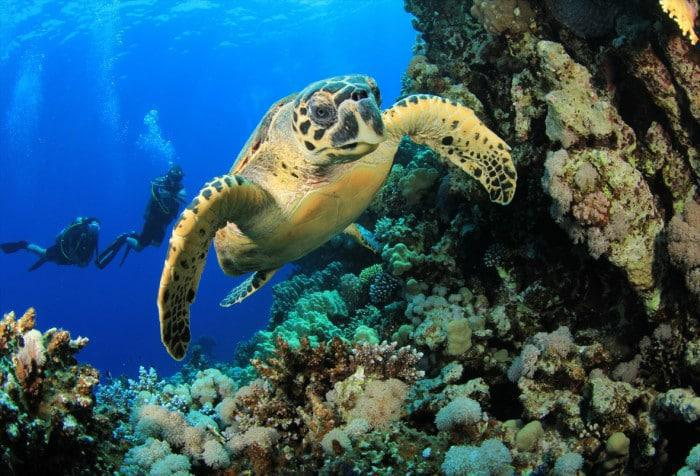 Diving with turtles in Bazaruto Archipelago