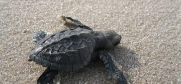 Tracking Turtles: One Of The Most Moving Wildlife Encounters