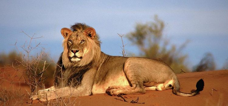 Namibia's Incredible Desert Adapted Animals