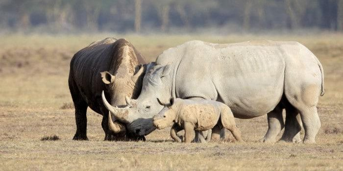 Who's moving the Rhinos?