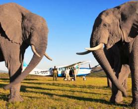 addo-elephant-safari-lodge