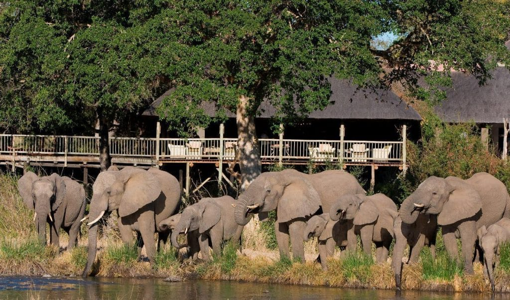 sabi sabi bush lodge Elephants