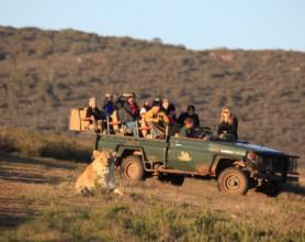 garden route game lodge game drive