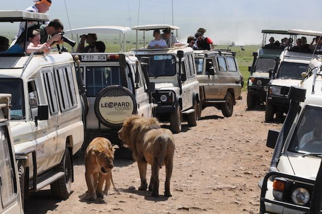 ngorongoro crater crowds
