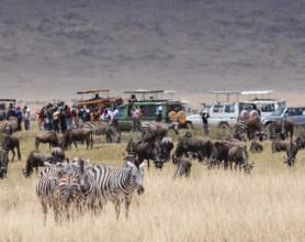 ngorongoro crowds
