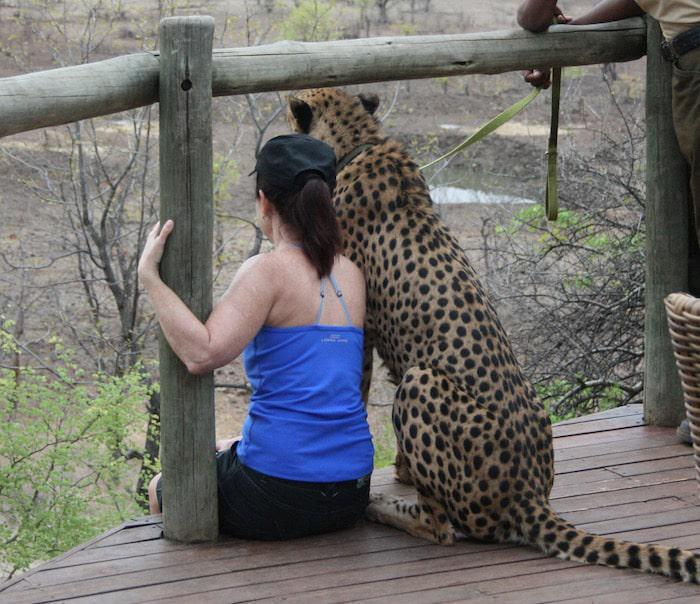 cheetah at vic falls