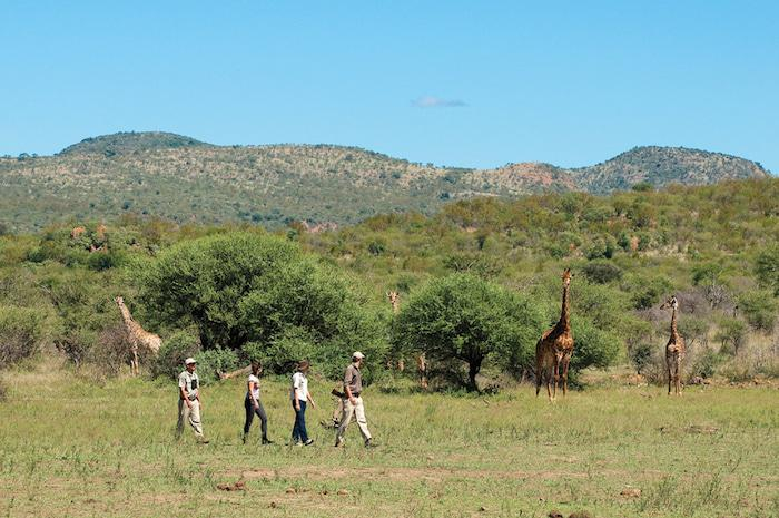 Madikwe Safari Lodge guided bushwalk