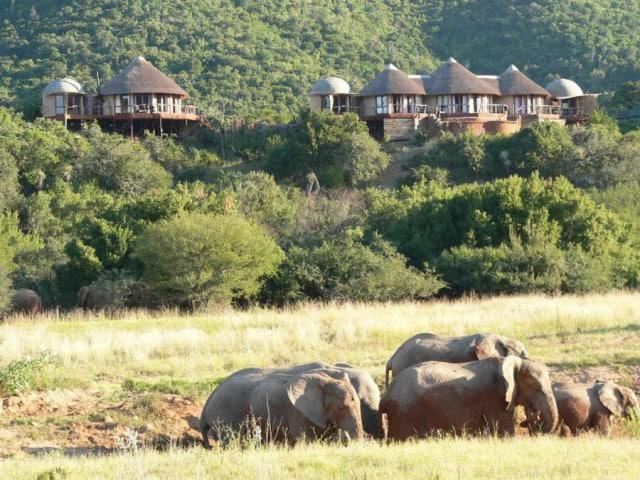 Nguni River Lodge at Addo Elephant National Park