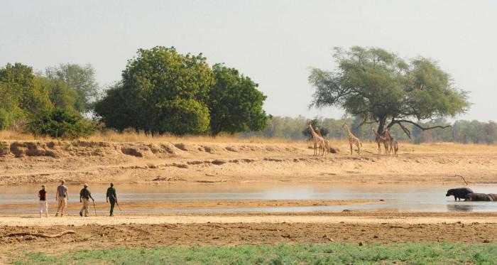 Norman Carr walking safaris in Zambia