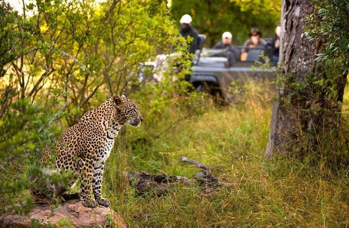 Off road private safari in Sabi Sand GR