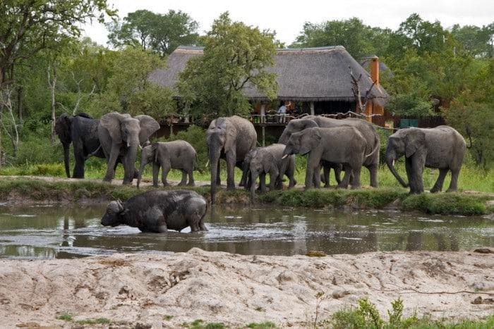 Waterhole at Simbambili Game Lodge