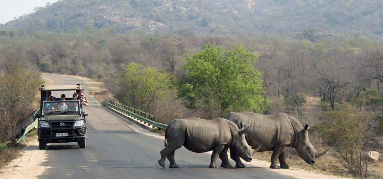 Why Is Kruger The Best Safari Destination In South Africa?