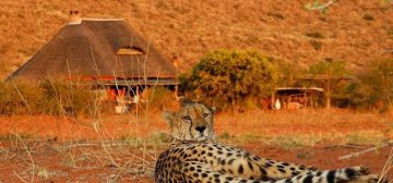 The Most Divine Desert Safari – with Tswalu Kalahari