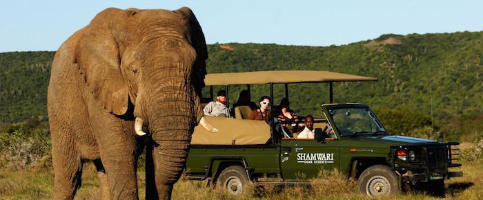 shamwari elephant