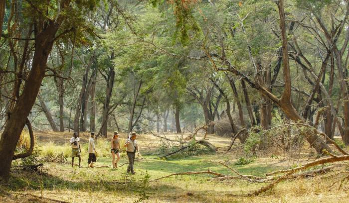 Chongwe walking safari