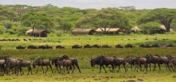 East Africa trip feedback : Gorilla Trekking, The Serengeti, Ngorongoro Crater