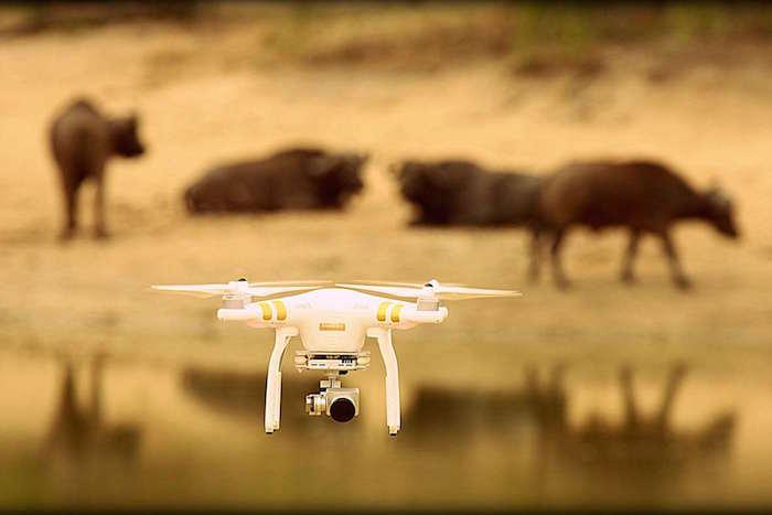 safari-drone