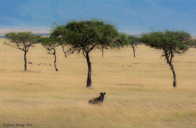 Loan Hyena
