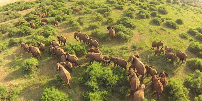 Drones & Wildlife – Should You Bring Yours on Safari?