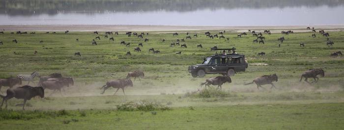 Serengeti_UC_2014-105